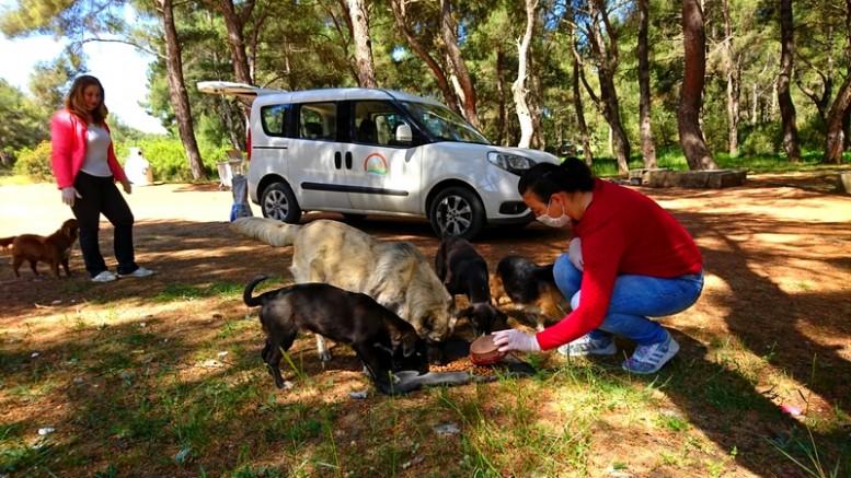 Sokak Hayvanları İzmir İl Tarım ve Orman Müdürlüğü'ne Emanet